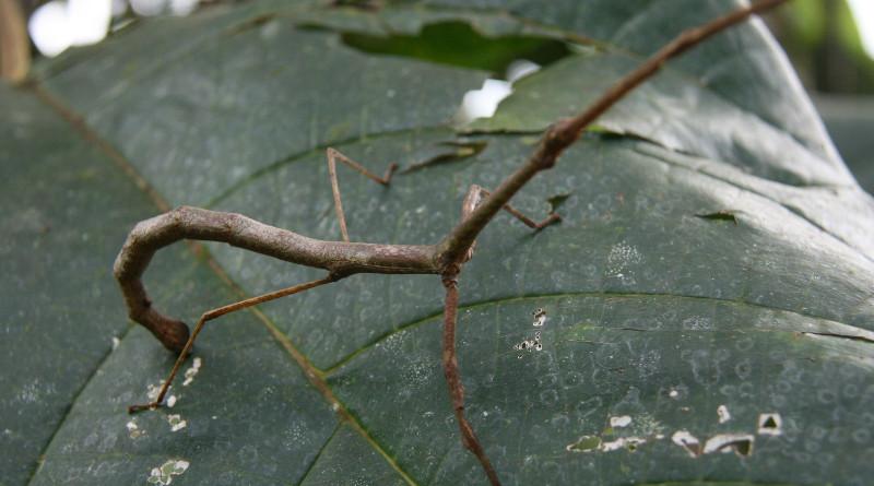 Strašilky